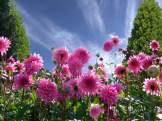 a-beautiful-day-1170686_1920
